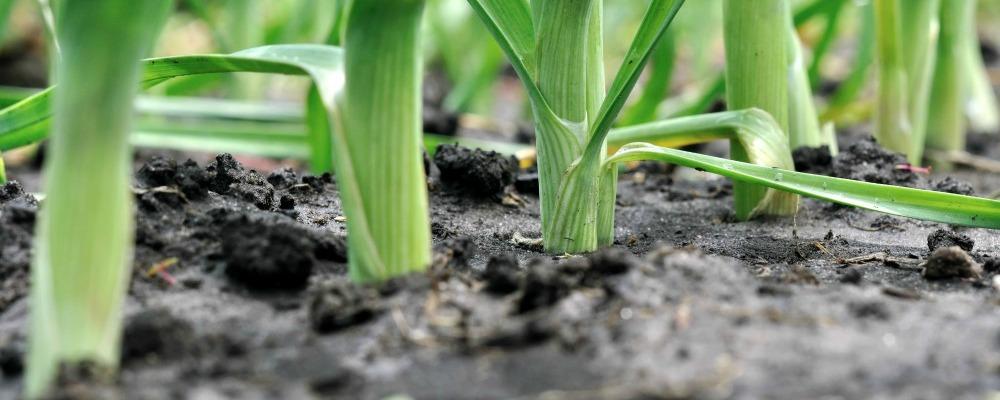 Soil Sampling Defined – Discover Your Land's Elemental Diversity